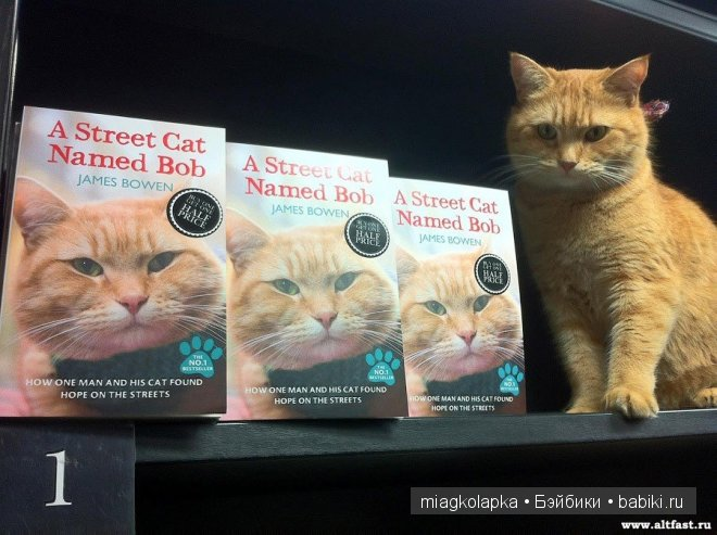 A street cat named bob is the heart-warming true story of james bowen and his ginger cat bob, and how the stray cat