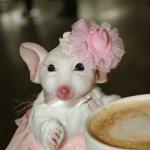 Мышь гламурная куклы реборн Татьяны Цорн