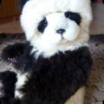 Панда Хан.