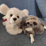 Парочка собачка и ленивец