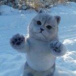 Авторский кот Маркиз