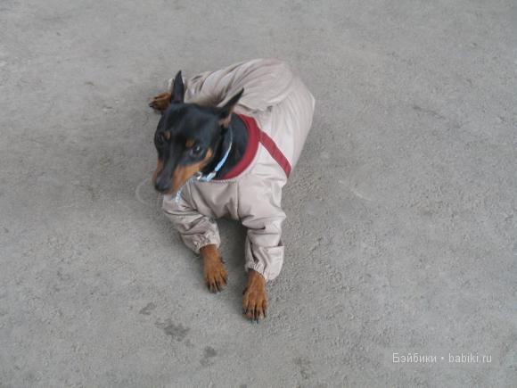 собаки на Бэйбиках