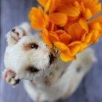 Летний карманный мишка тедди