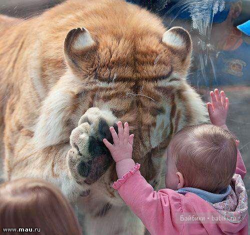 ребенок видит кошку которой нет себе, например