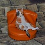 Разноцветный котик от JXK Studio.