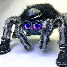 Топ,топ,топает... паук. Иннокентий (Кеша)