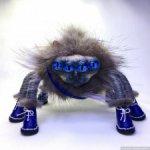 ПаукОкот Марсель с глазами цвета индиго.