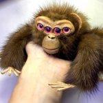 Ананас,паук-обезьяна