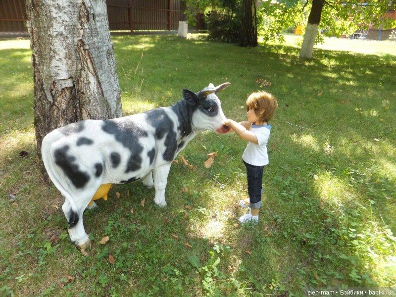 Погладил корову