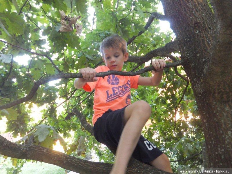 Данька на дереве