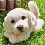 Тедди щенок лабрадор