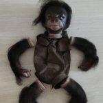Молд обезьянки Киви