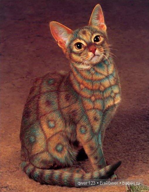 окраска кошки