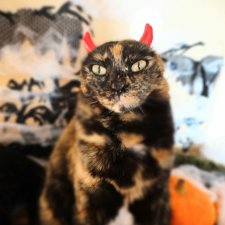 Наш котовый Хеллоуин