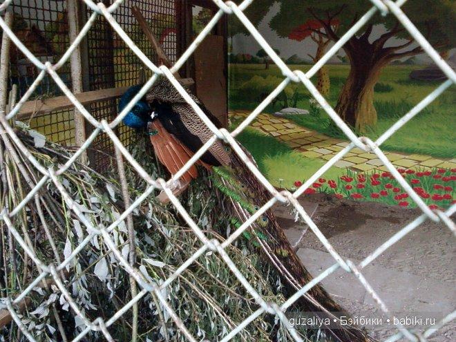 вход в зоопарк был свободным