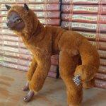 Красный волк Буанзу.