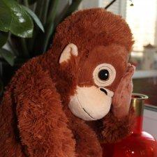 История одной обезьянки