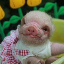 Свинка Хлоя. Часть 2