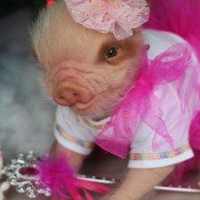 Мисс Piggy Queen. Свинка реборн из молда Thistle by Cindy Musgrove