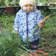 Уборка урожая и подготовка к холодам