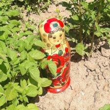 Во саду ли, во огороде. Миссис Бэйбики 2020