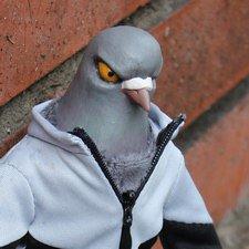 Чёткий голубь