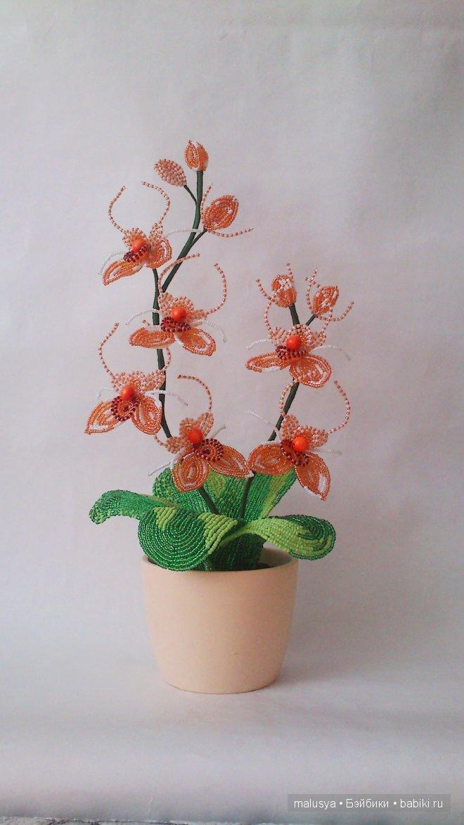 Орхидея-паучок