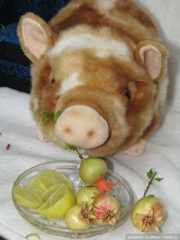 картинка свинья в апельсинах развести