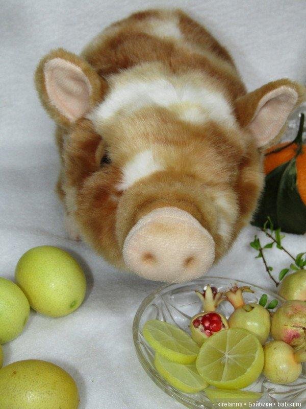 картинка свинья в апельсинах расскажите