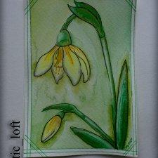 Новый открытки. Цветы