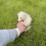 Медведица Мама Шамана от +panda+