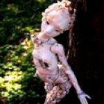 Мне привиделась Дриада. Шарнирная кукла