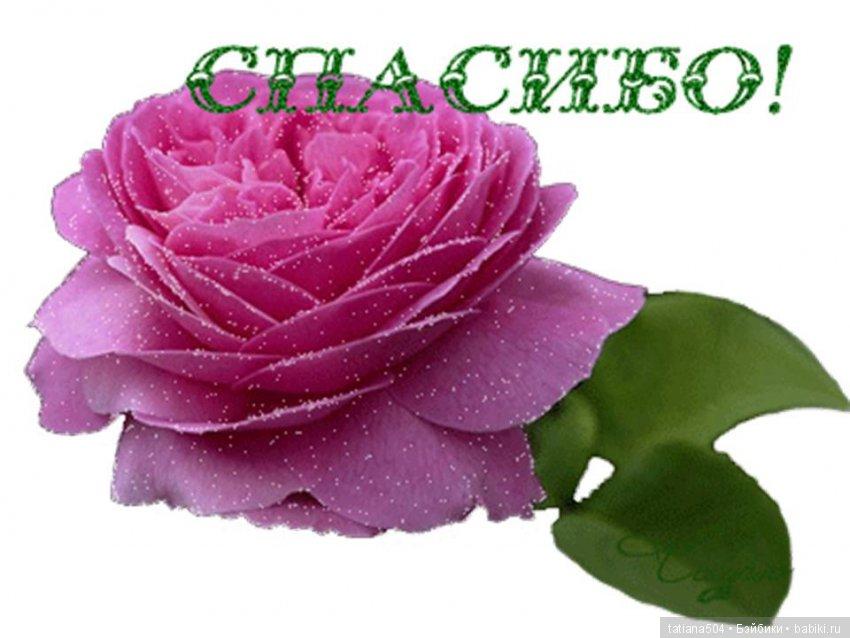 Картинки роза с надписью спасибо