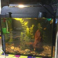 Мой аквариум (рубрика в мире моих животных)