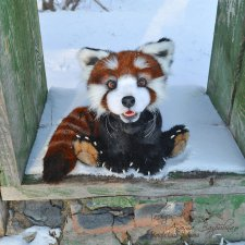 Тяопи - озорной малыш красной панды