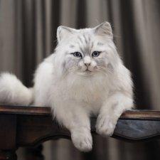 Кошечка Белая длинношерстная. Игрушка в стиле натюр