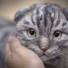 Шотландский вислоухий котик. Реалистичная игрушка