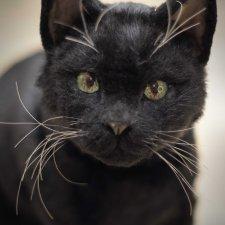 Черный кот - реалистичная игрушка