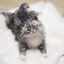 Пушистый котенок. Реалистичная игрушка