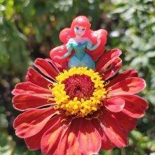 Остановись, мгновенье! Купальские цветы юга