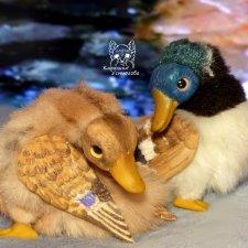 Утки. Весенняя пара
