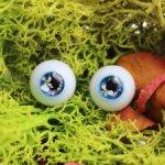 Фентези глазки с сухоцветами 12/6 мм