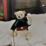 Белый медведь Сахарок