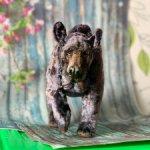 Осфальд чёрный медведь