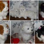 Интерактивные  котята и щенята от FurRealFrends, Hasbro (Хазбро) и др. производителей
