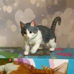 Серый шарнирный кот