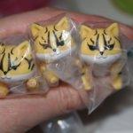 Продам подвижных котов