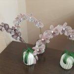 Орхидеи для Ваших любимиц