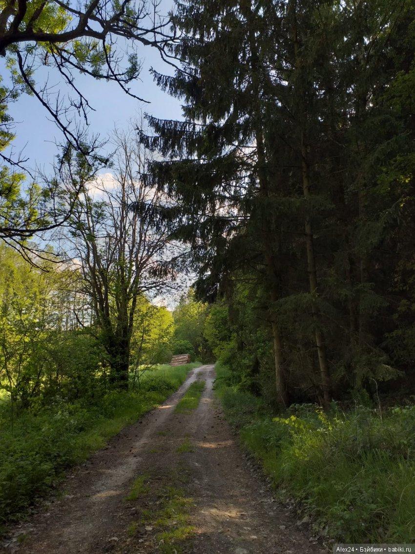 и ещё несколько лесных пейзажей