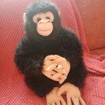 Большая обезьяна.